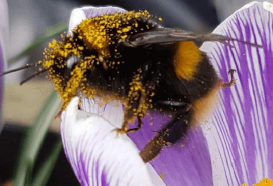 wasp and bee nest removal specialists in Hampshire