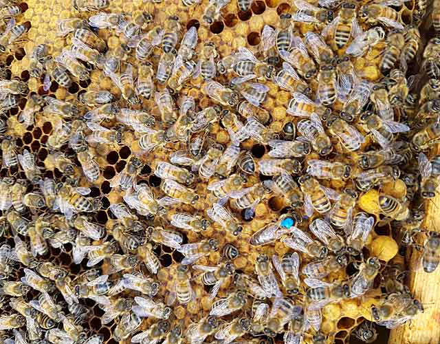 Bees nest removal experts