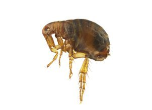 Insect removal and bed bugs